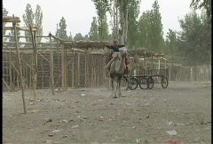 Boy riding camel  Stock Footage