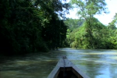 River jungle 2 Stock Footage