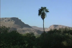 Galilee region with palm Stock Footage
