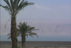 Dead Sea with palms Stock Footage