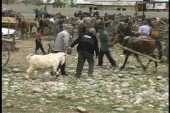 Market & livestock Stock Footage