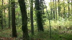 Tracking through broadleaf trees in a dark woodland. Stock Footage