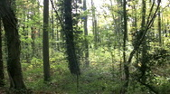 Stock Video Footage of Tracking through broadleaf trees in a dark woodland.