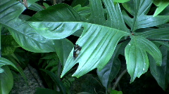 Black and white polkadot butterfly  Stock Footage