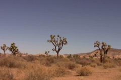 Joshua Tree Landscape 1 Loop - stock footage