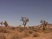 Joshua Tree Landscape 1 Loop Stock Footage