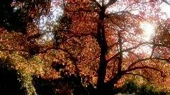 Fall Foliage Autumn Leaves - stock footage