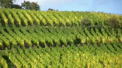 Vineyard in Alsace France  Stock Footage