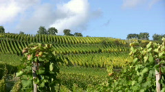 Vineyard in Alsace - France Stock Footage