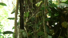 Biosphere2 - Pan across the rain forest Stock Footage