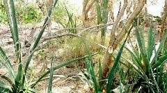Biosphere2 - Cactus life Stock Footage