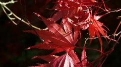 Fall Foliage Autumn Leaves Stock Footage