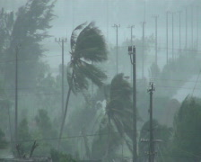 Palm Trees Blow In Hurricane Winds Stock Footage