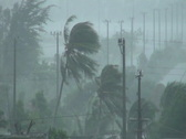Stock Video Footage of Palm Trees Blow In Hurricane Winds