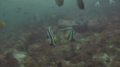 Banner Fish Stock Footage