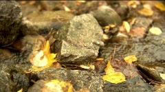Autumn creek dolly move Stock Footage