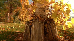 Autumn dolly shot along the ground to reveal lake Stock Footage