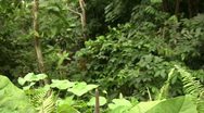 Pan to a tropical ariod flower at the Eden Project, UK Stock Footage