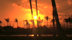 Tropical Sunset Through the Palm Trees in Honolulu, Hawaii - stock footage