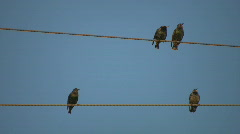 Birds. Couples and singles. Stock Footage