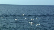 Stock Video Footage of Seagulls fly water