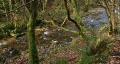 River english woodland HD Footage