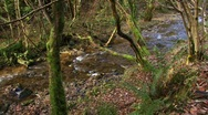 Stock Video Footage of River english woodland