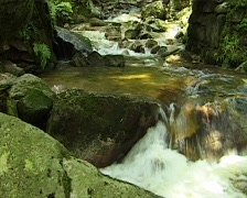 Small water stream in the Black Forest, Germany Stock Footage