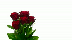 Rotating bouquet of red roses with water drops, endless loop 10  Stock Footage