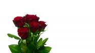 Stock Video Footage of Rotating bouquet of red roses with water drops, endless loop 10
