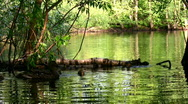 Small lake with Ducks Stock Footage