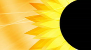Sunflower abstract background Stock Footage