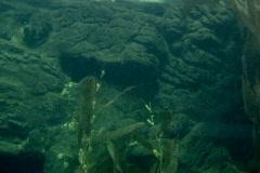 Tiger sharks, bass, yellowtail Stock Footage