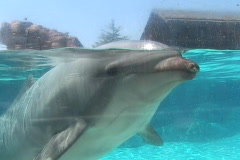 Dolphin sits and waits patiently Stock Footage