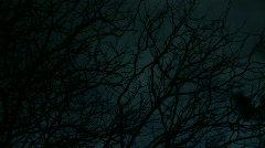Spooky Eerie Trees at  Night - Moonlight Timelapse  Stock Footage