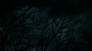 Stock Video Footage of Spooky Eerie Trees at  Night - Moonlight Timelapse
