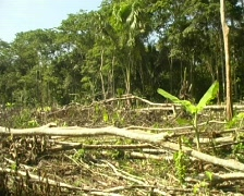 Rainforest cleared for slash and burn agriculture in Loreto Province, Peru Stock Footage