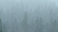 Stock Video Footage of Forest Snowfall 3
