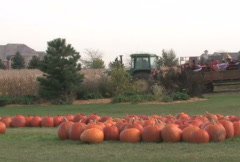 Autumn Hay Ride Stock Footage