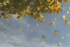 Autumn Leaves Falling 1 Stock Footage