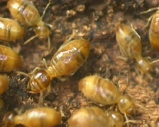 Termites in a rotting log Stock Footage