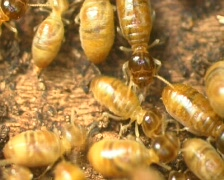Termites in a rotting log - stock footage