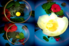 Fried eggs and flowers - stock footage