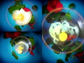 Fried eggs and flowers Stock Footage