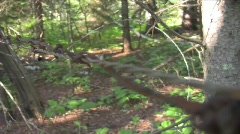 Barb wire 1 Stock Footage