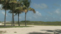 Tropical Palm Trees on the Beach Stock Footage