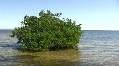 Mangrove Isle 01 Stock Footage