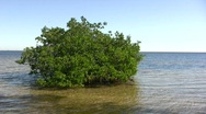 Stock Video Footage of Mangrove Isle 01