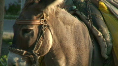 Working donkey turning head left and right Stock Footage
