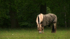 Horse 1 Stock Footage